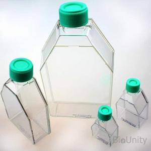 Флакон культуральный 25 см², с обработанной поверхностью, для монослойных культур клеток, крышка-фильтр, 50 мл, стерильный, PS